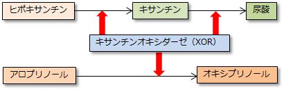 尿酸の生成過程