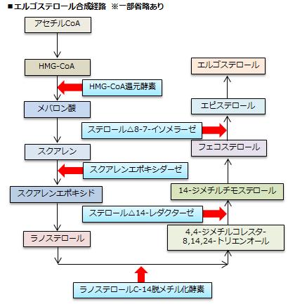 エルゴステロール合成経路