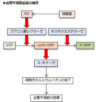 硝酸薬の血管平滑筋拡張の機序