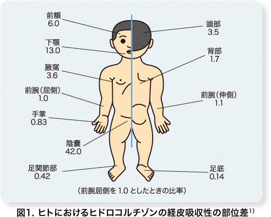ヒドロコルチゾンの経皮吸収性