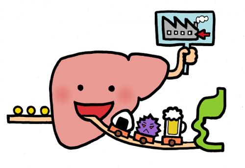 肝臓工場イメージ